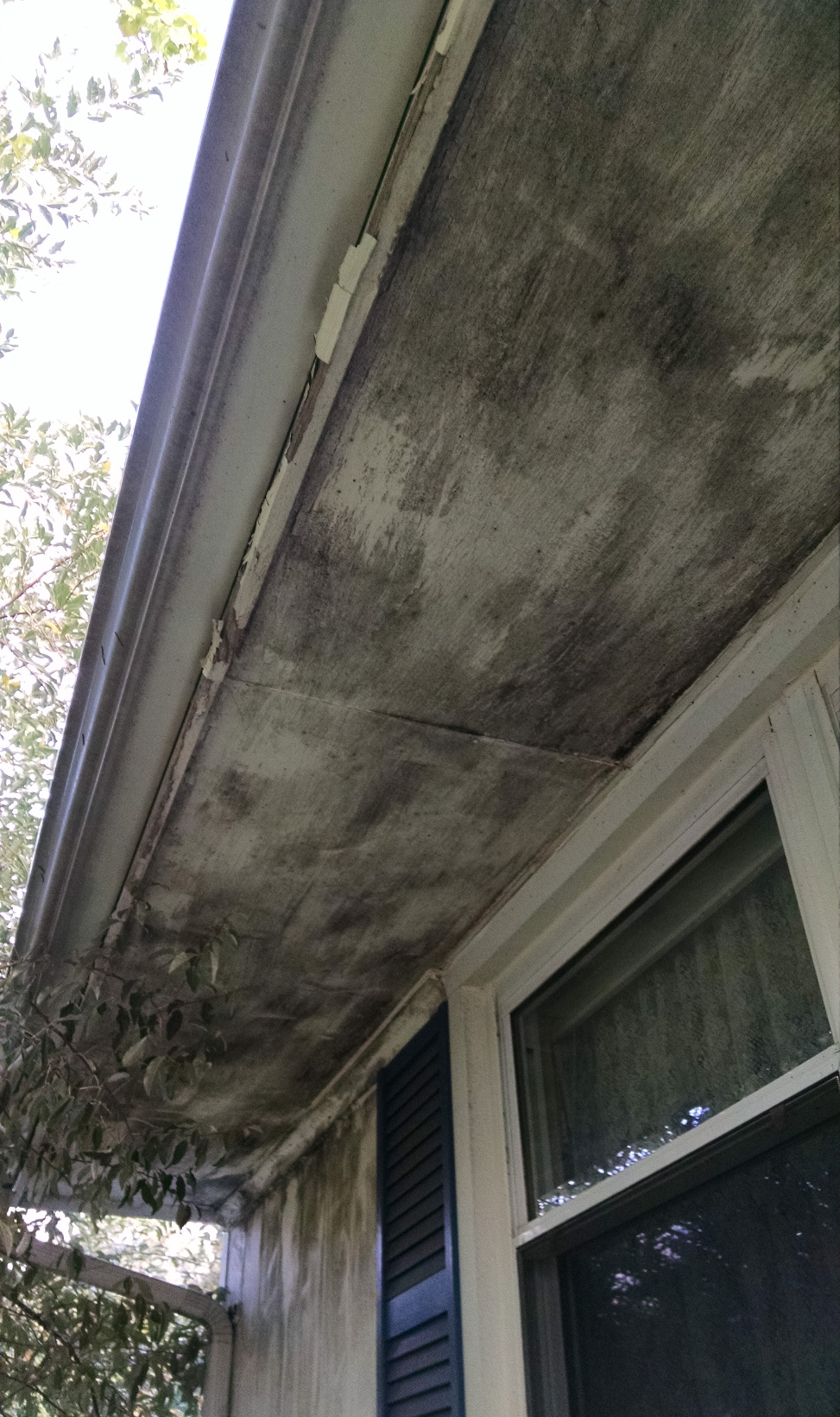 Exterior House Mold