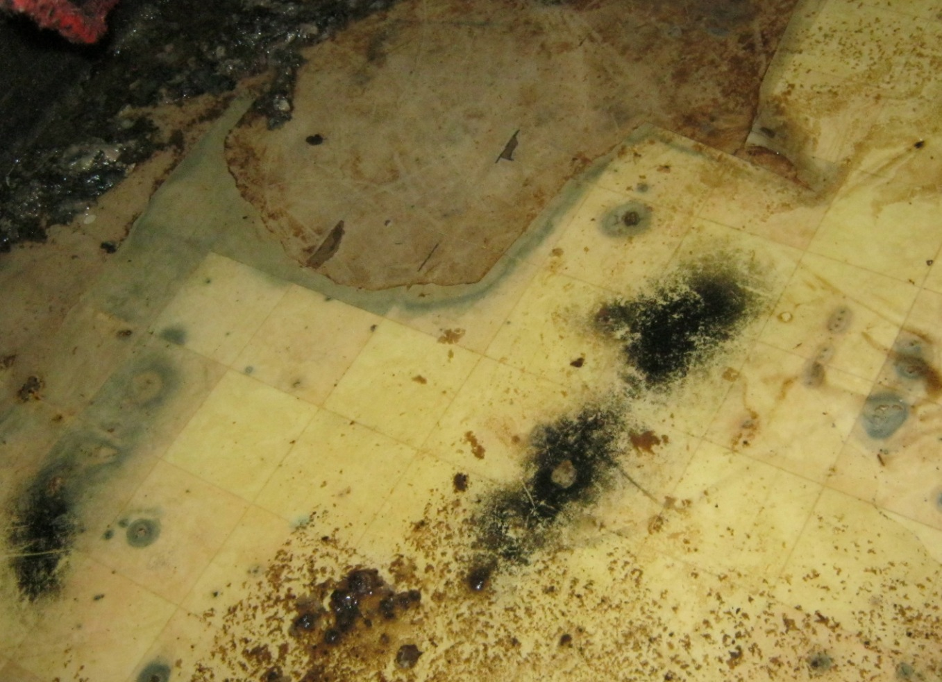 Mold crawlspace floor