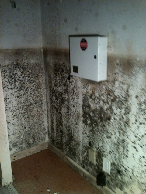 Mold from flood