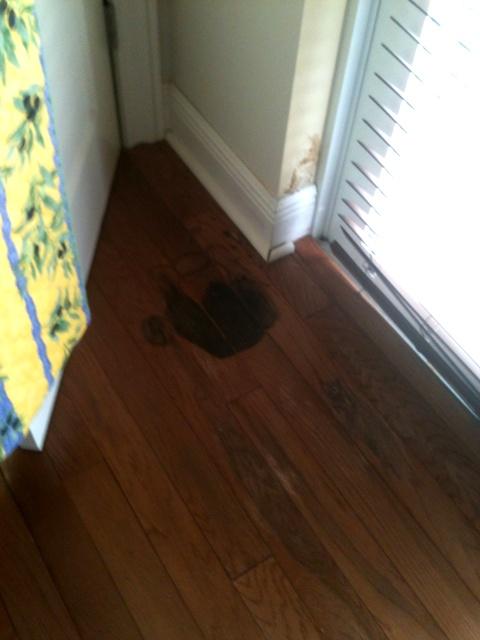 Window leak mold