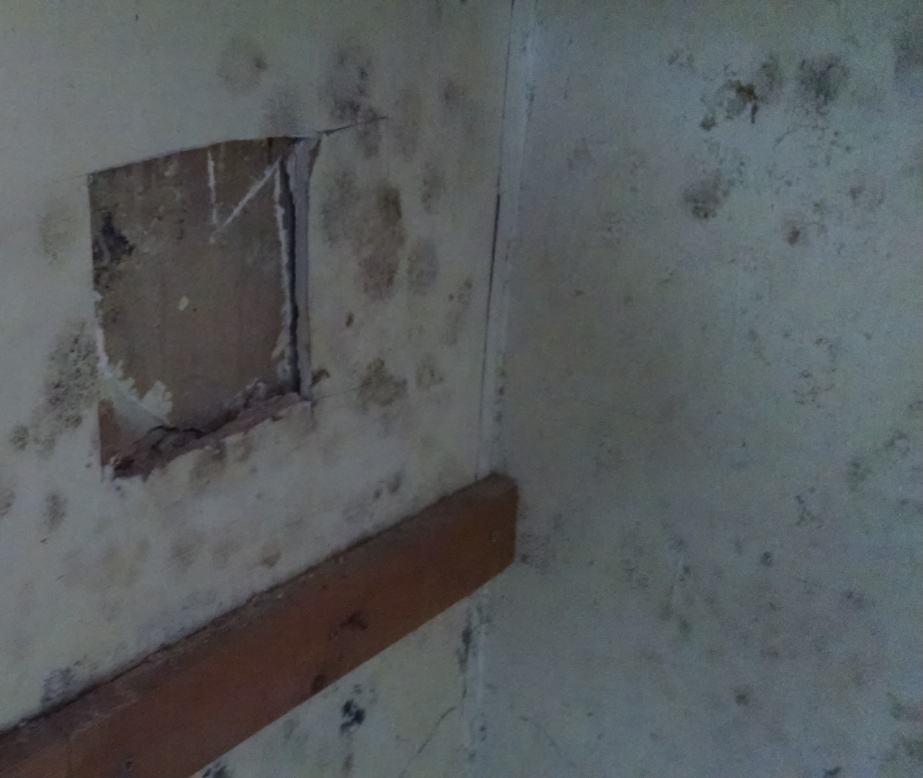 Mold on sheetrock