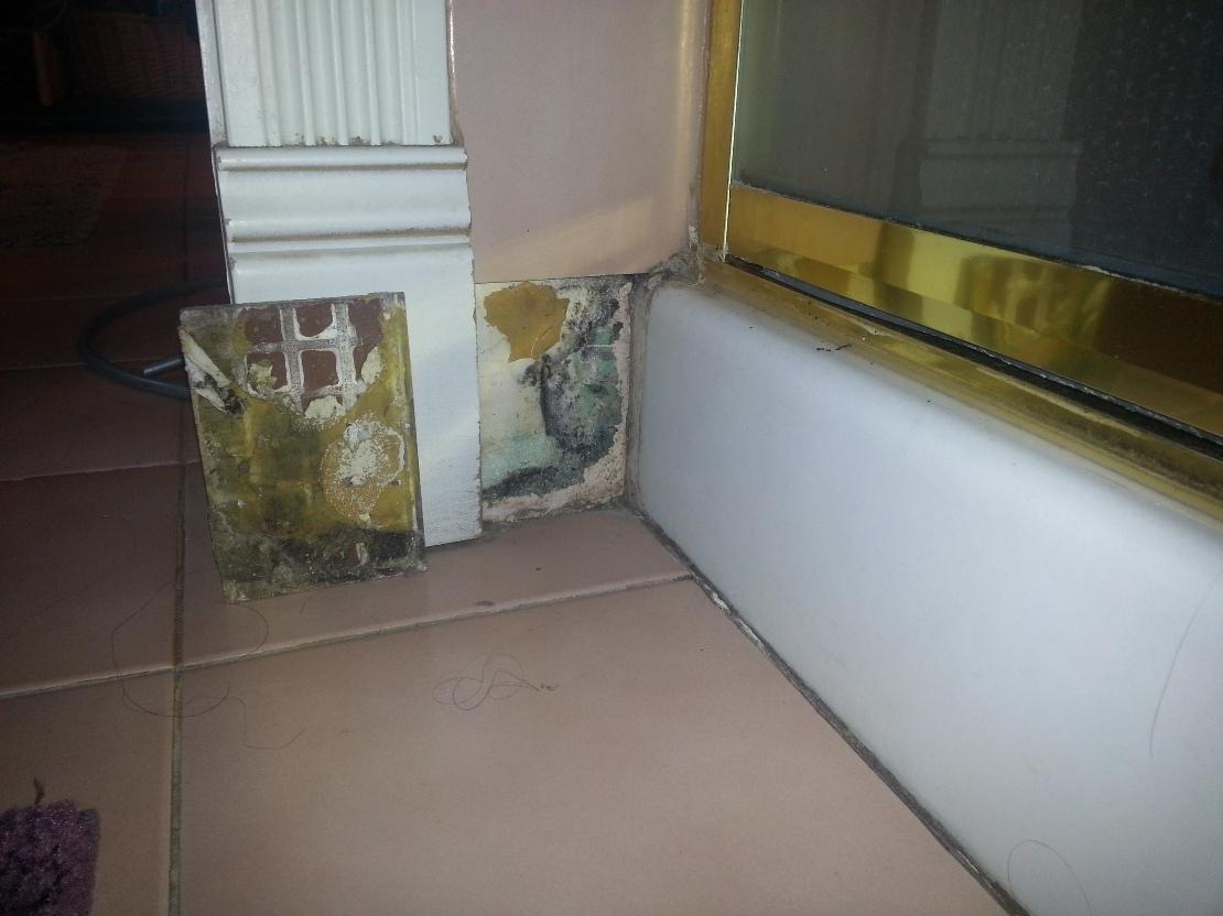 Shower leak mold