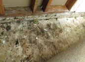 100 Pictures Of Mold In The Home