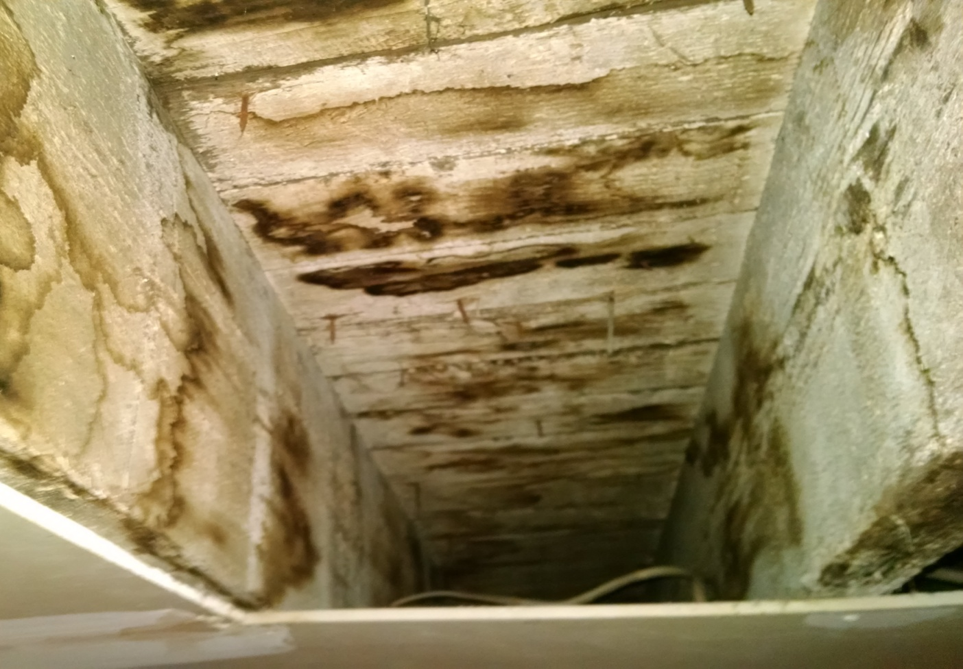 basement ceiling mold