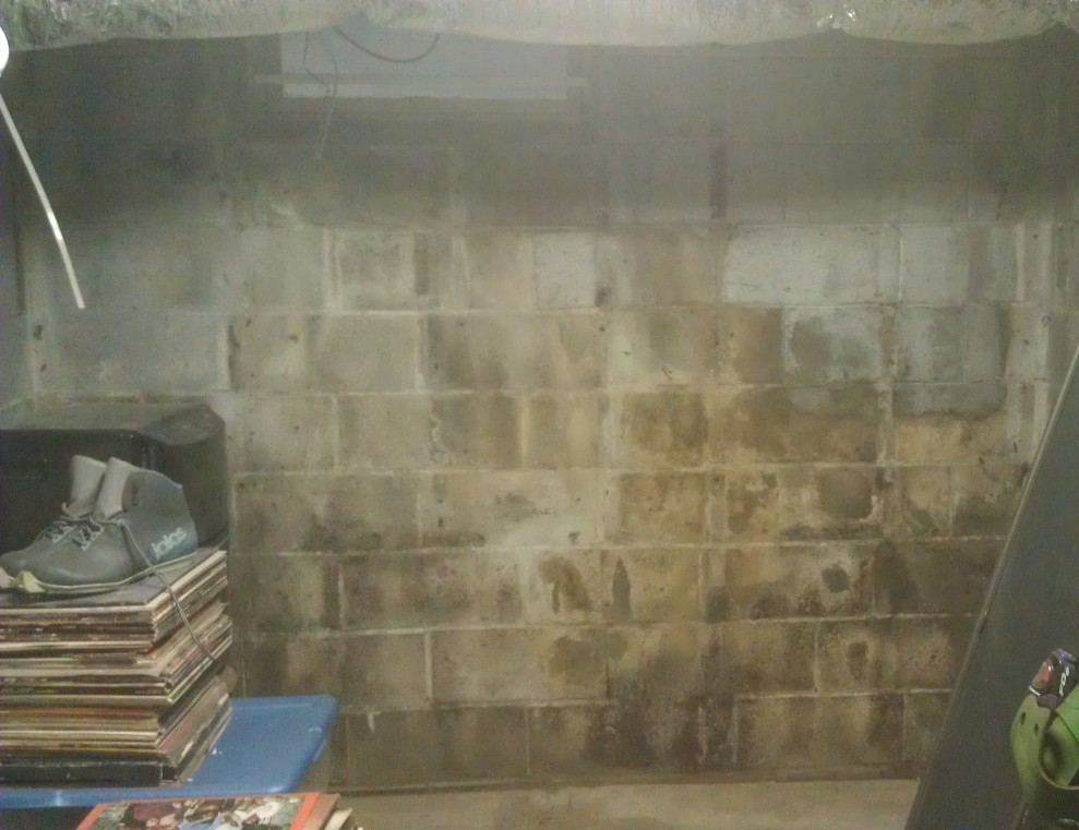 basement cement wall with mold