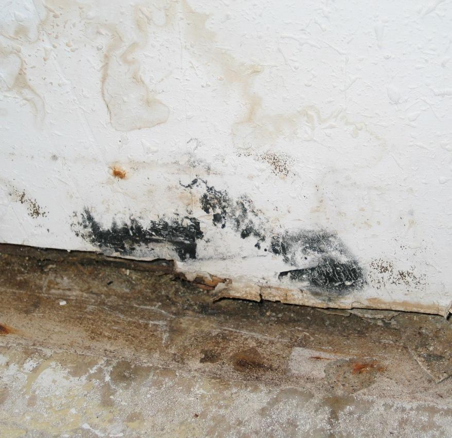 Wall floor mold