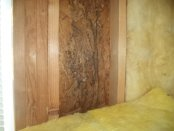 attic wall and insulation mold