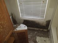 Mold after hurricane