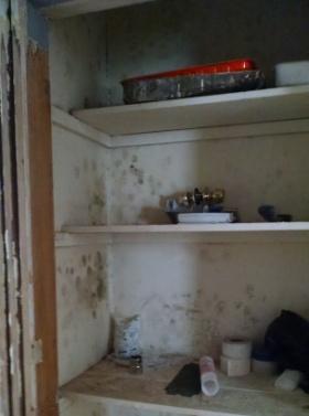 mold in closet