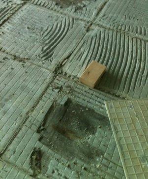 Mold on mesh under tiles