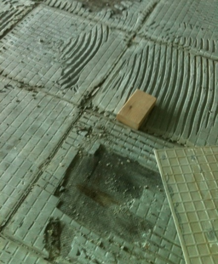 Subfloor Mold        Finding, Removal