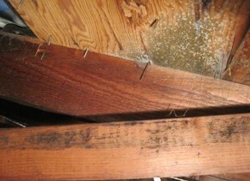 prevent attic mold & How To Prevent Attic Mold