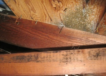 prevent attic mold