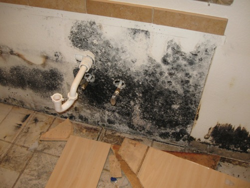 black mold removal companies