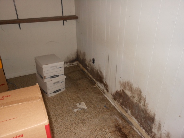 hoarding and mold