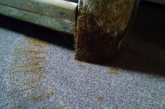 how to find mould in house