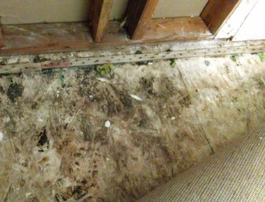 Black Mold Pictures And Information. Light Blue Living Room Curtains. Black White And Red Themed Living Room. City Furniture Living Room Chairs. Led Light Strips Living Room. Living Room End Tables. Wall Fixtures For Living Room. Beige And Purple Living Room. Living Room Decorating Ideas Art Deco