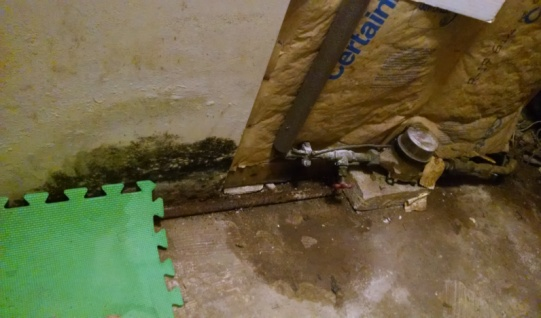 What Causes Mold In Your Home Finding Mold Removal