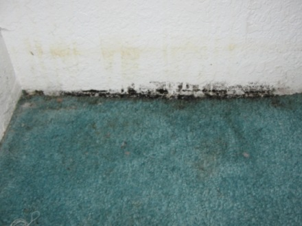 Mold In Carpet