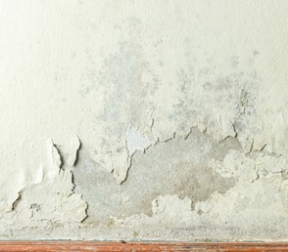 Mildew Mold Your Home Differences Dangers Removal