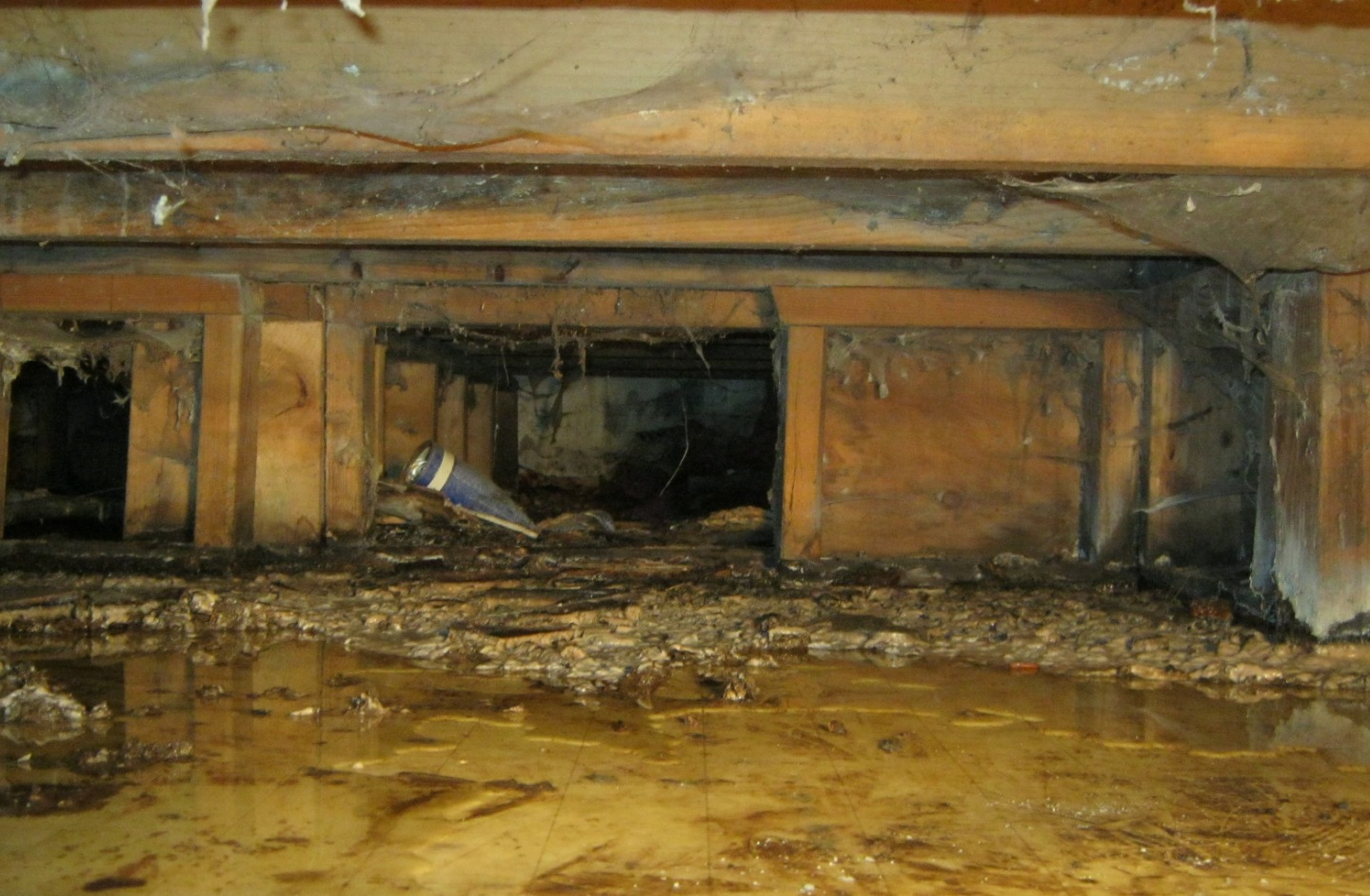 Mold crawlspace wet
