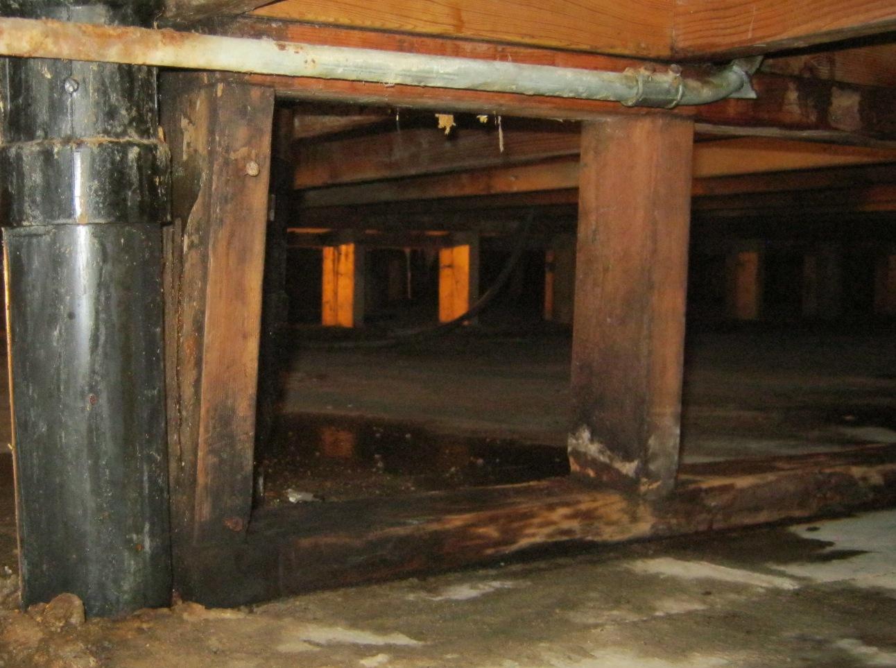 Mold crawlspace damp