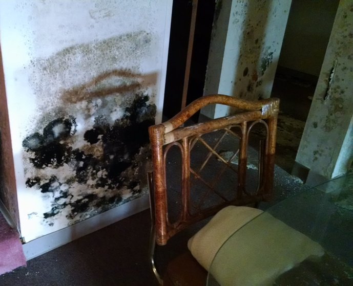 How Mold Can Damage Your House Finding