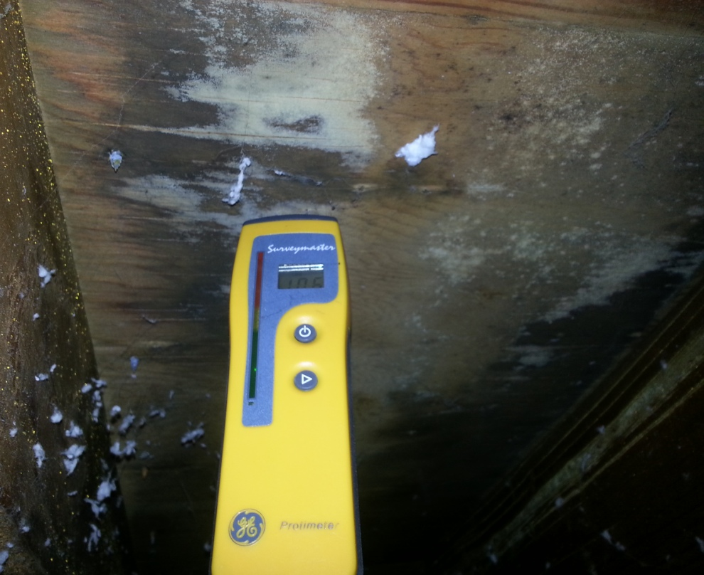 Mold from leaking roof