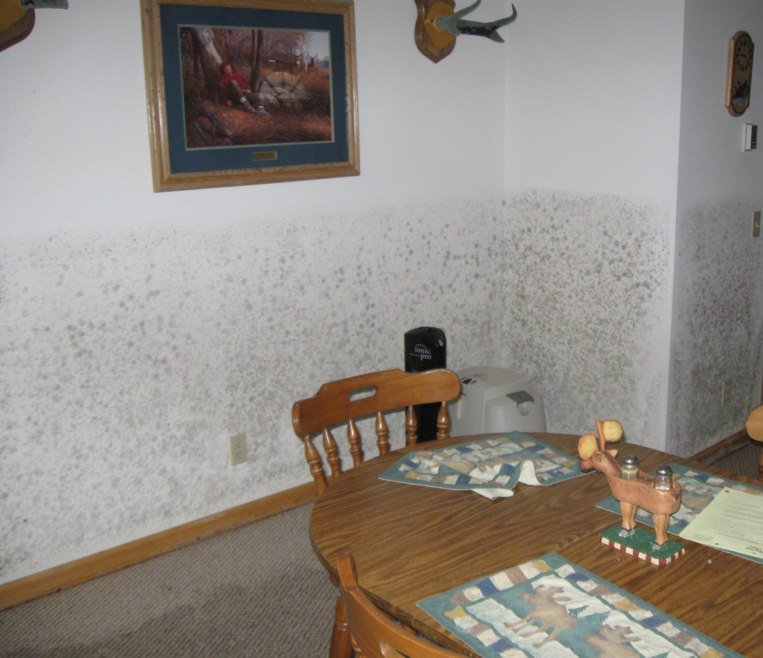 Walls antlers with mold