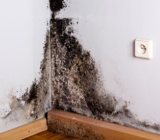 Mildew Vs Mold In Your Home Differences Dangers Removal