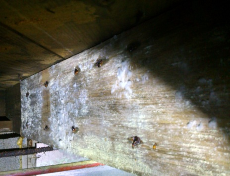 Mold Efflorescence How Tell The Difference
