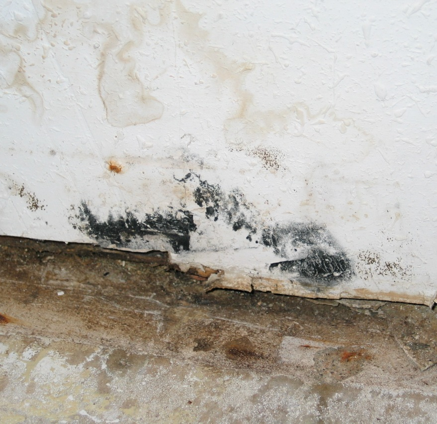 Wall floor mold