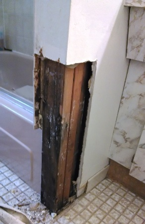 Mold In Bathroom Causes what causes mold in your home ……finding mold, removal, prevention
