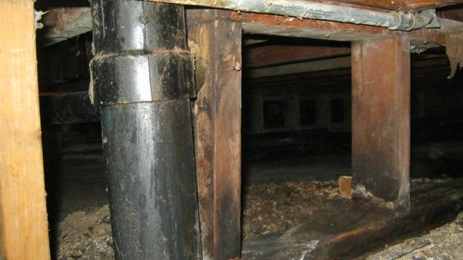 black mold in crawlspace