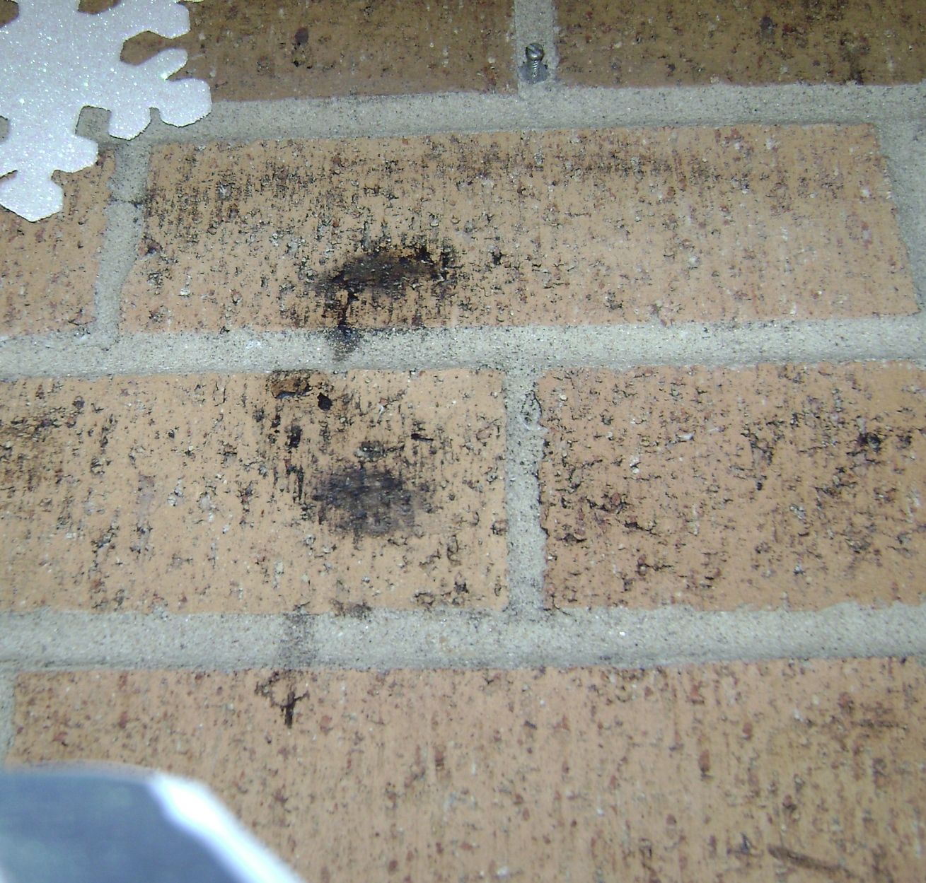 mold on brick