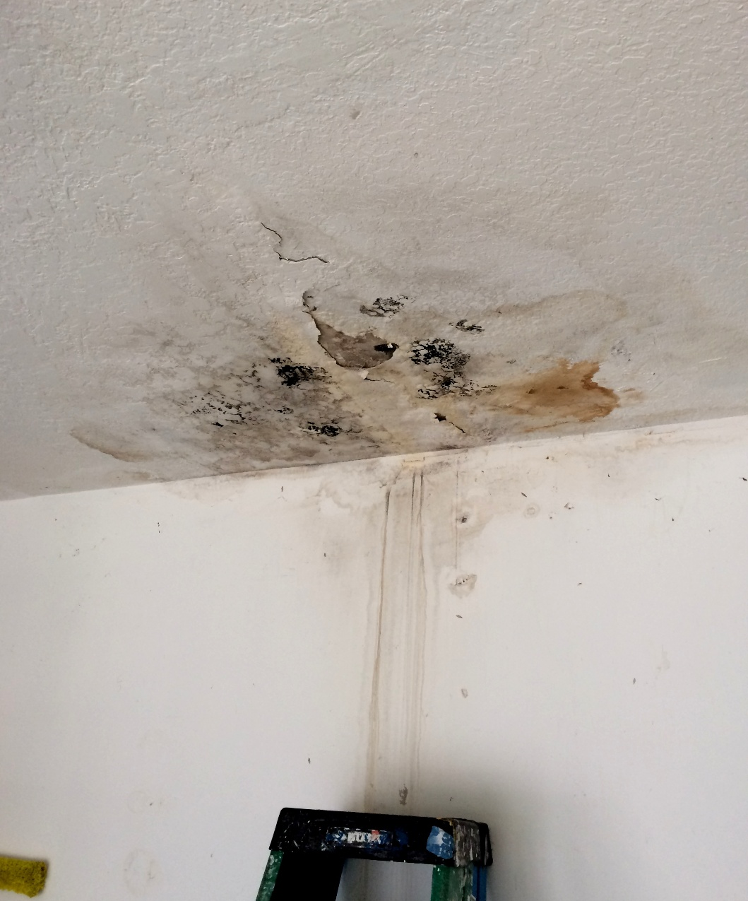 Mold on ceiling from leak