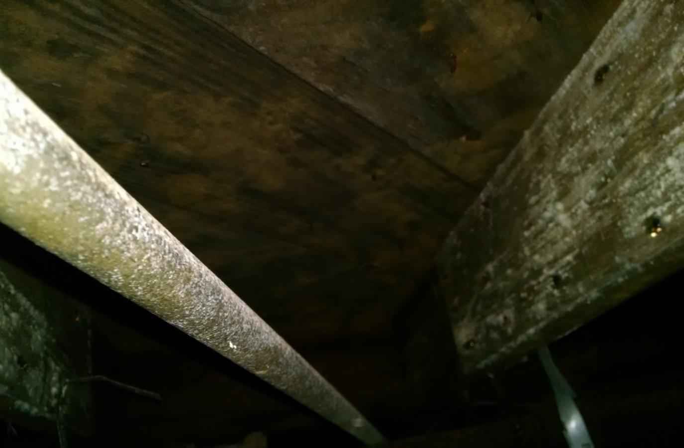 White mold crawlspace