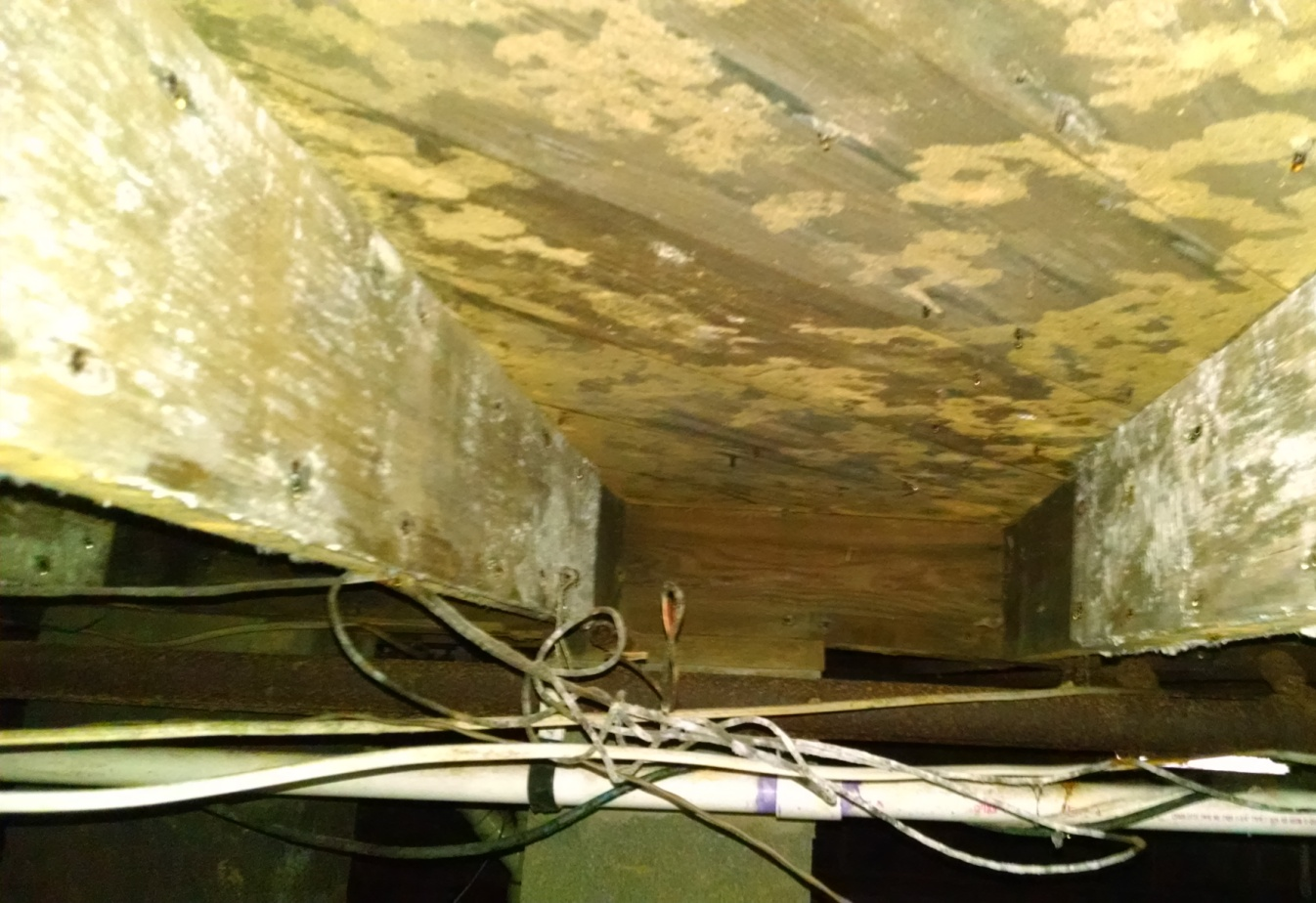 Crawlspace white and yellow mold