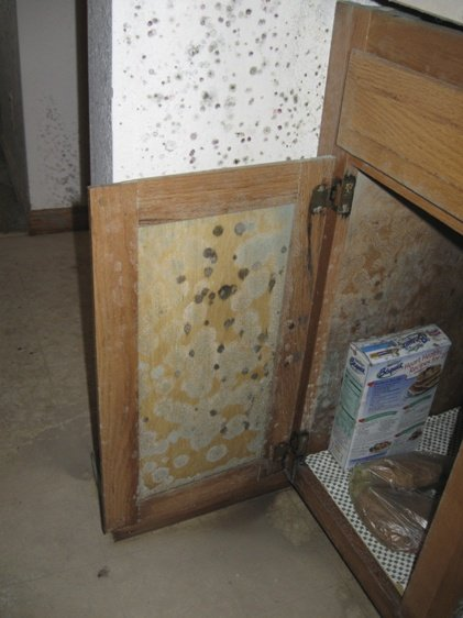 Household Mold Removal