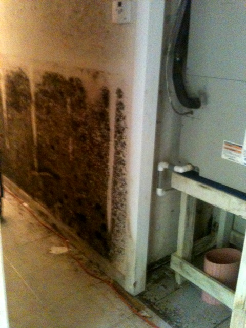 Mold after flood