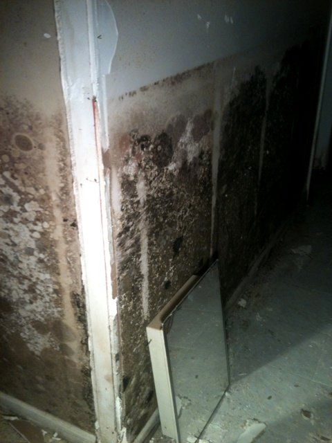 Basement flood mold