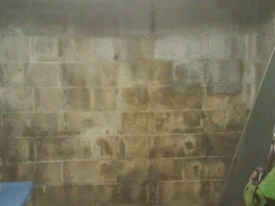 Mold on cement wall