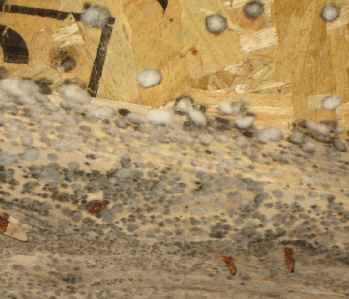 Closeup of mold