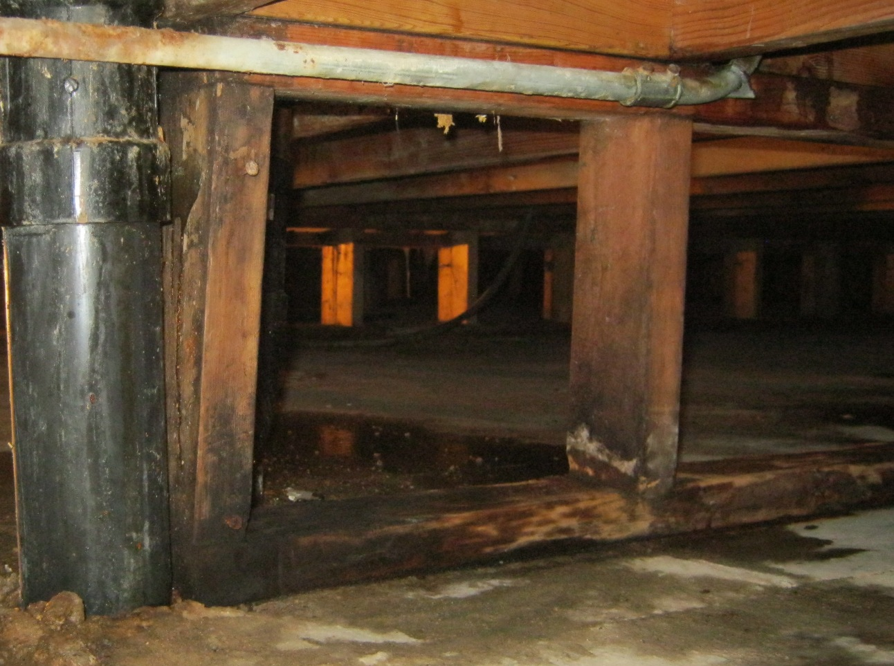 Mold crawlspace damp