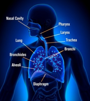 How Does Mold In Lungs Cause Illness