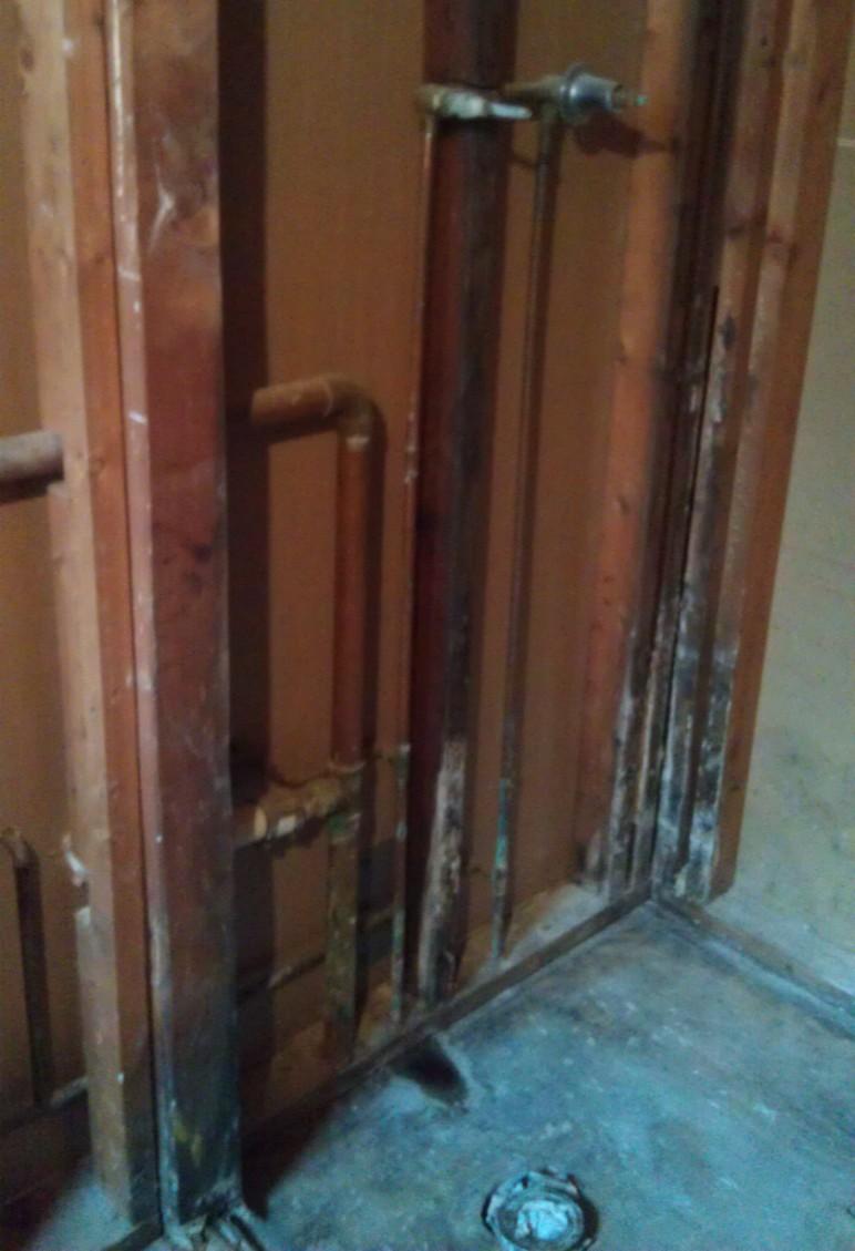 Mold from shower leak