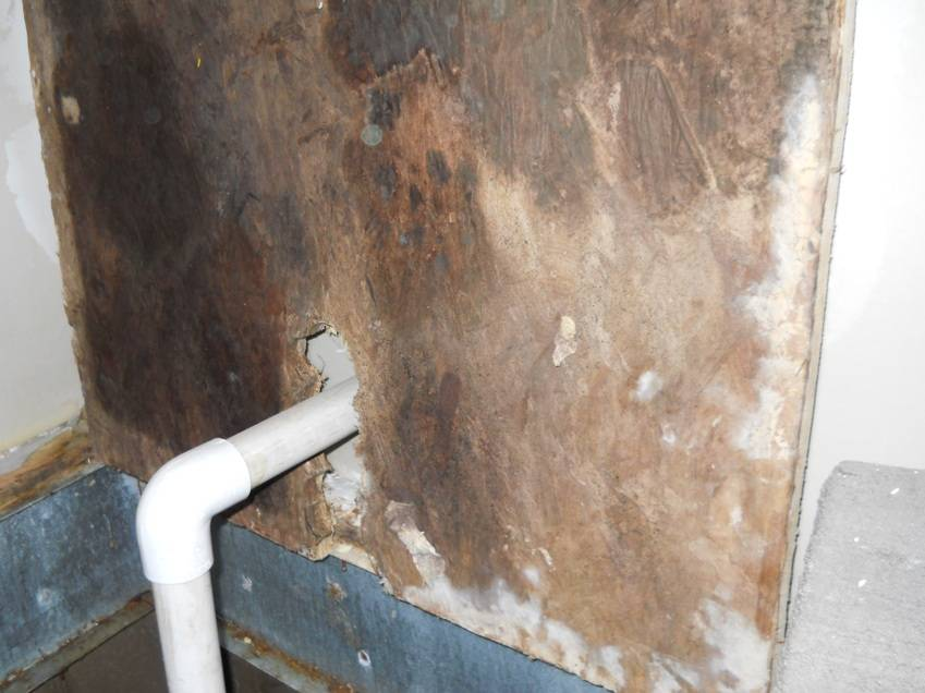 100 of Mold in the Home